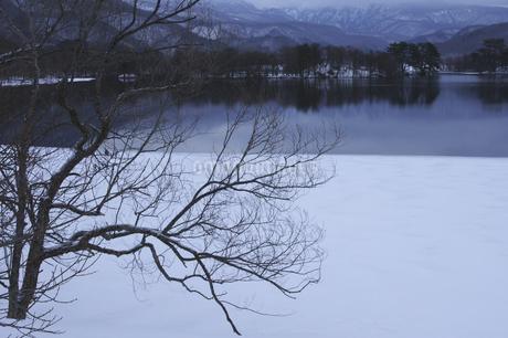 小野川湖の冬の写真素材 [FYI04120322]
