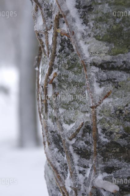 氷の写真素材 [FYI04120331]