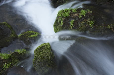 渓流の写真素材 [FYI04120356]