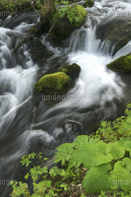 渓流と新緑の写真素材 [FYI04120371]