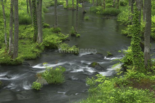 長瀬川にての写真素材 [FYI04120391]