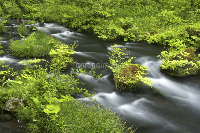 長瀬川にての写真素材 [FYI04120392]