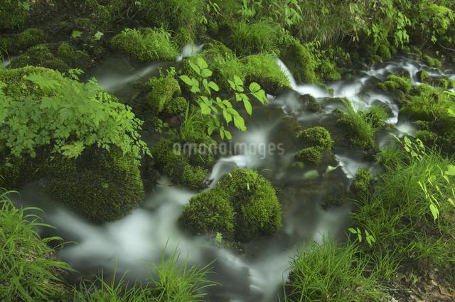 沢と苔の写真素材 [FYI04120395]