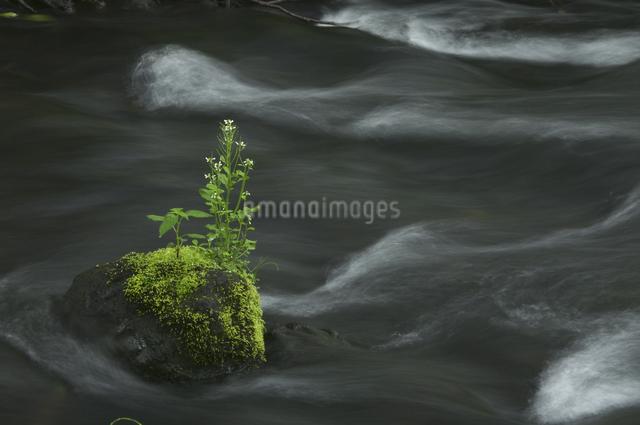 渓流と苔の写真素材 [FYI04120402]