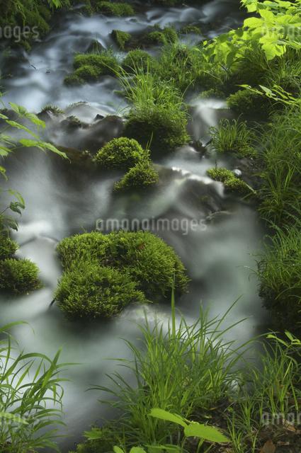沢と苔の写真素材 [FYI04120407]