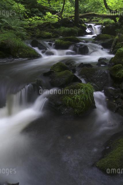 渓流の写真素材 [FYI04120431]