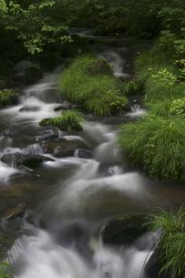 渓流の写真素材 [FYI04120432]