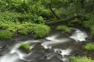 渓流の写真素材 [FYI04120433]