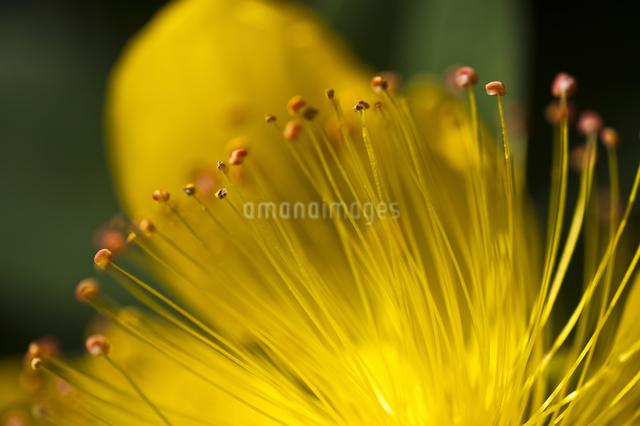 花   クローズアップの写真素材 [FYI04120622]