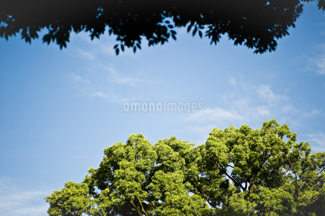 樹木と青空の写真素材 [FYI04120641]