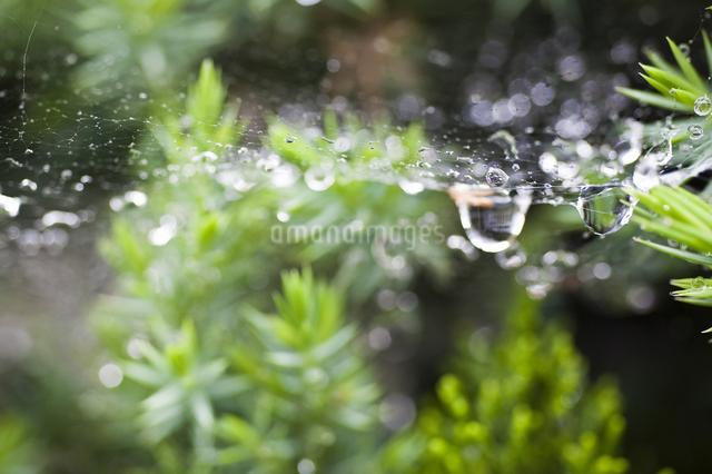 クモの巣の写真素材 [FYI04120727]