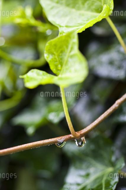 雨だれの写真素材 [FYI04120729]