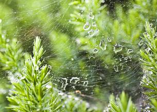 クモの巣の写真素材 [FYI04120730]