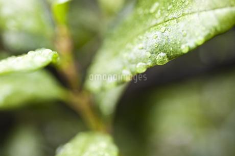 雨だれの写真素材 [FYI04120731]
