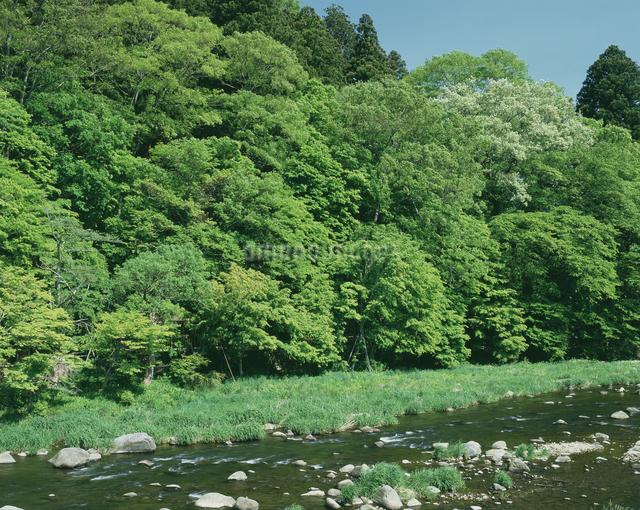新緑の箒川の写真素材 [FYI04120845]