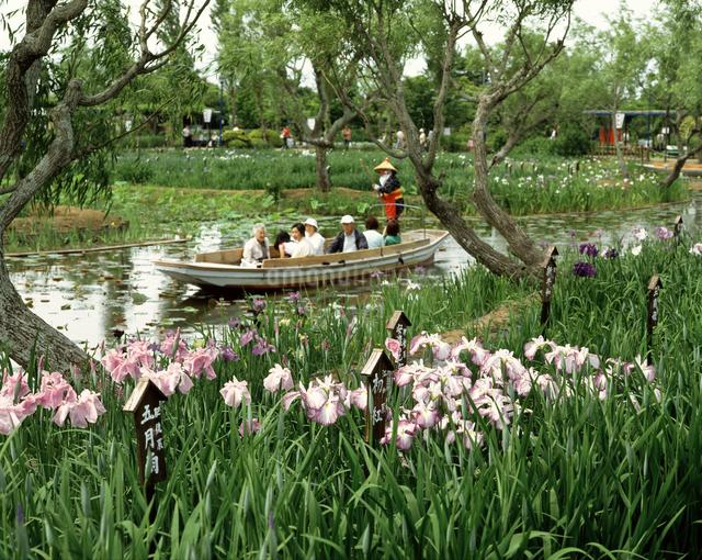 水郷佐原水生植物園の写真素材 [FYI04120871]