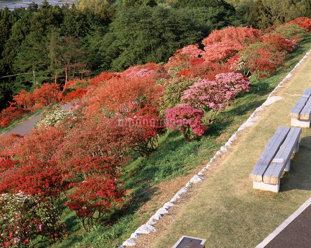 笠間つつじ公園の写真素材 [FYI04120889]