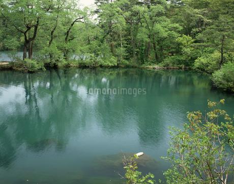 新緑の柳沼の写真素材 [FYI04120956]
