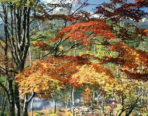 一の瀬園地の紅葉の写真素材 [FYI04120964]