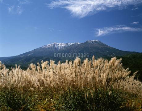 ススキと御嶽山の写真素材 [FYI04120970]