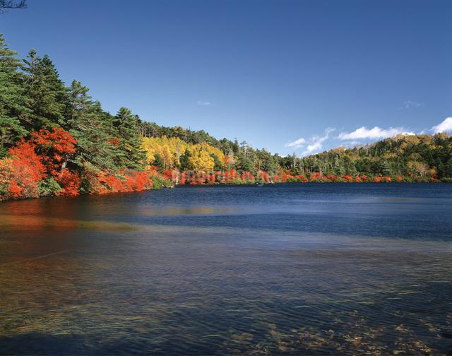 秋の白駒池の写真素材 [FYI04120977]