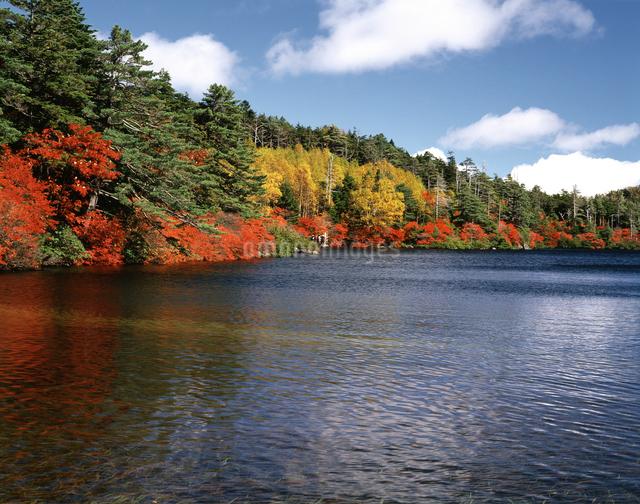 秋の白駒池の写真素材 [FYI04120978]