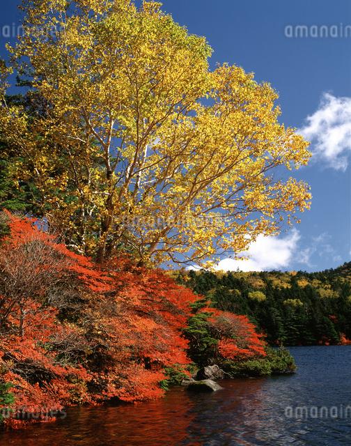 秋の白駒池の写真素材 [FYI04120979]