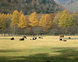 秋の光徳牧場の写真素材 [FYI04121021]