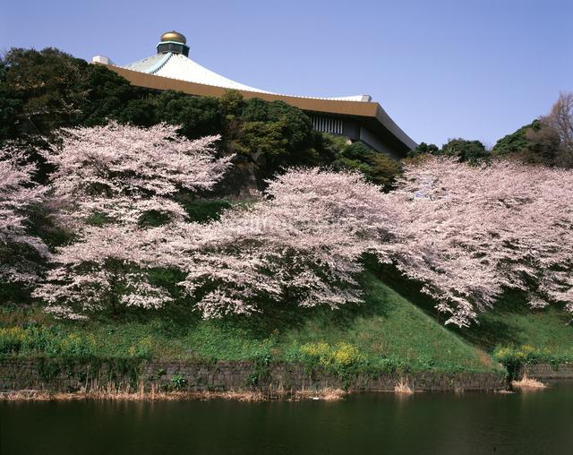 日本武道館と桜の写真素材 [FYI04121205]