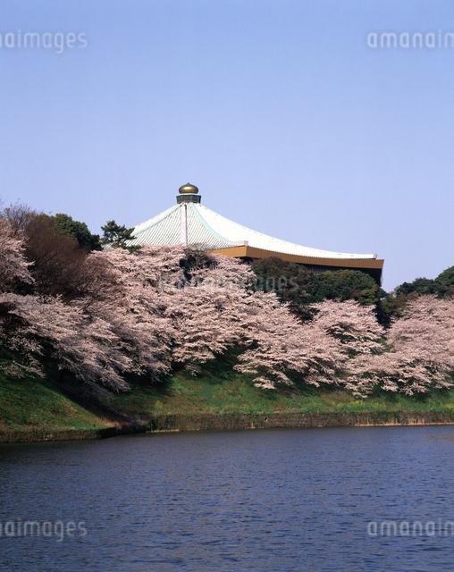 日本武道館と桜の写真素材 [FYI04121206]