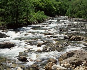 新緑と湯檜曽川の写真素材 [FYI04121226]