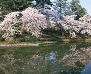 桜の写真素材 [FYI04121301]