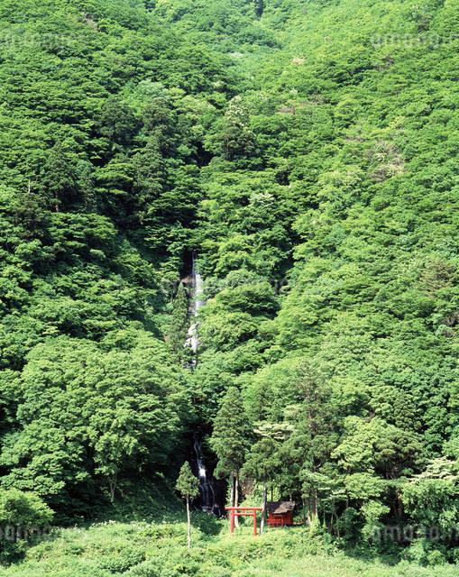 白糸の滝の写真素材 [FYI04121313]