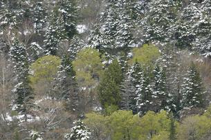 樹の写真素材 [FYI04121750]