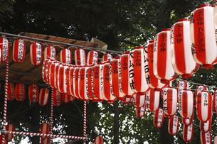 盆踊りの提灯の写真素材 [FYI04122872]