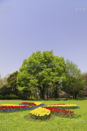 チューリップ咲く公園の写真素材 [FYI04123299]