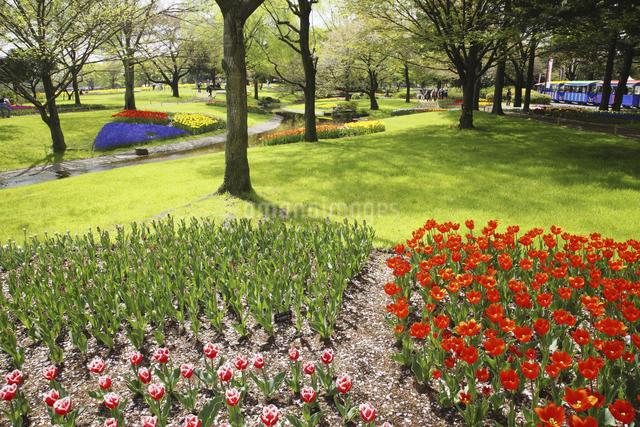 チューリップ咲く公園の写真素材 [FYI04123300]