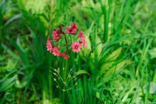 初夏の花の写真素材 [FYI04123864]