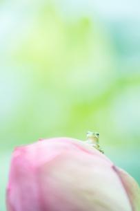 梅雨のひとやすみの写真素材 [FYI04124285]