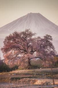 わに塚の桜の写真素材 [FYI04124288]