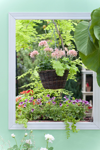 窓枠の中の鉢植えの写真素材 [FYI04124358]