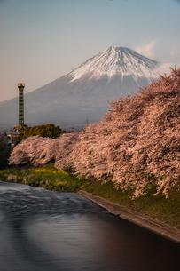 桜と富士山の写真素材 [FYI04124507]