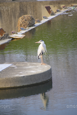 白い鳥の写真素材 [FYI04125071]