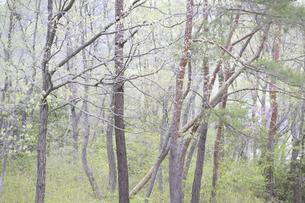 造形的な雑木林の写真素材 [FYI04125387]