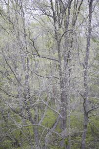 造形的な雑木林の写真素材 [FYI04125403]