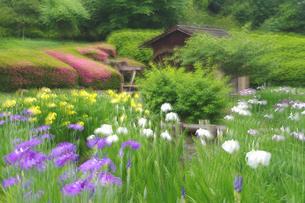 水車と花しょうぶの写真素材 [FYI04125658]