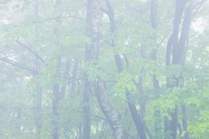 霧の写真素材 [FYI04126776]