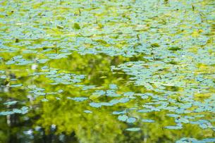 御池の写真素材 [FYI04126844]