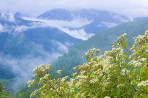 雨上がりの山の写真素材 [FYI04126889]