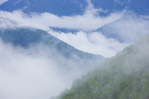 雨上がりの山の写真素材 [FYI04126892]